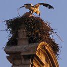 Nesting storks by Gili Orr