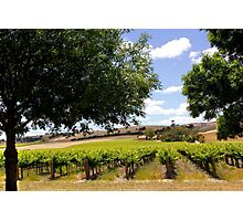 Australian Vineyard Landscape Photographic Print