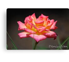 Curling Petals of Pink and Yellow Canvas Print