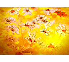 Summer meadows'... Photographic Print