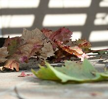 Fallen Leaves on Table by rominakatchidb