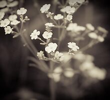 White Vintage  by KathyBerger