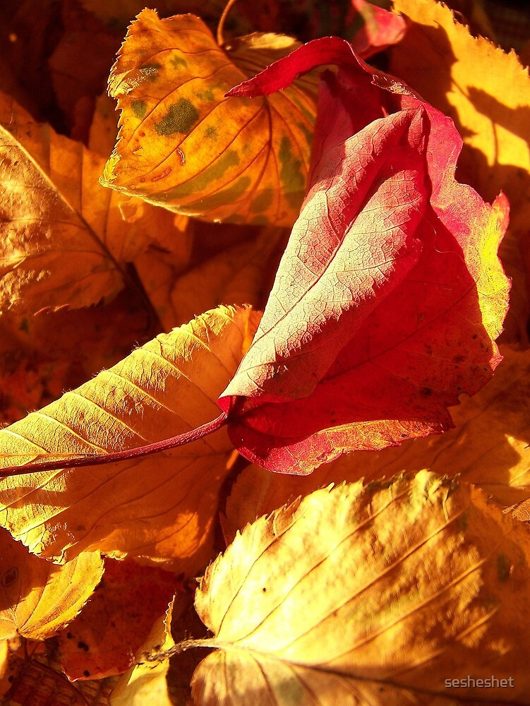warm is the color of my heart... by sesheshet