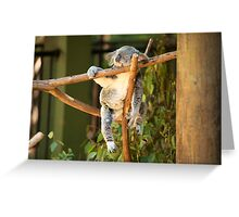 Tuckered out Koala by itself in a tree. Greeting Card