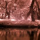 IR River Bank Redlands by Vaughan Whitworth