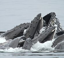 160 Tons Of Whale by Gina Ruttle  (Whalegeek)