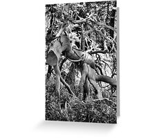 Black and White Beauty Greeting Card