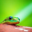 I'm Watching You... by Tracie Louise