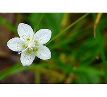 Make A Wish Upon A Star...Flower That Is. Photographic Print