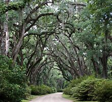 Trees of St. Francisville, Louisiana by Bonnie T.  Barry
