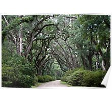 Trees of St. Francisville, Louisiana Poster