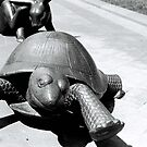 Tortoise and Hare, Boston by MaggieGrace