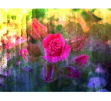 Painting Roses. Photographic Print