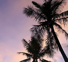 PALM TREES & SUNSET by hollyos7
