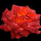 ROSE SPRINKELS by RoseMarie747