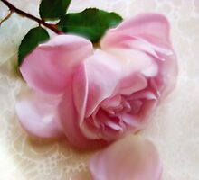 Pink Rose - Floral Bliss Aglow I by Cynthia Chronister