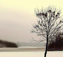 Peaceful Sky Of Winter - Lake Jacomo by Cynthia Chronister
