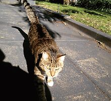 Neighbor's cat1 by Mimi Huang