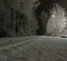 Trees, track on a cold night by Gaetan