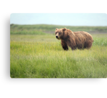 Walking With the Brown Bears in Hallo Bay Metal Print