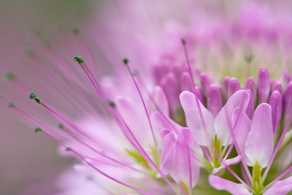 Dreamy Bee Flower by Kim Barton