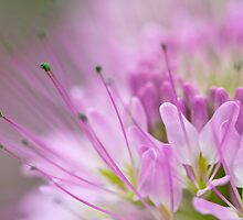 Dreamy Bee Flower by Kim Barton