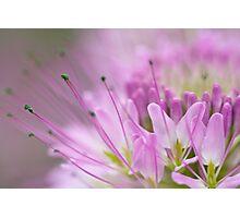 Dreamy Bee Flower Photographic Print