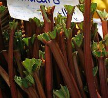 Rhubarb by Tessa Manning