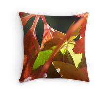 Boston Ivy Autumn - Daylesford Victoria Throw Pillow