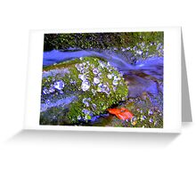 Abstract Ice Droplets in Stream  Greeting Card