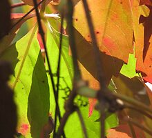 Autumn Leaves - 1 by SuziTC