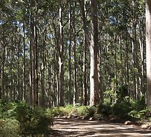 Boranup Forest #2, Nr Margaret River, Western Australia by Elaine Teague