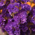 My Purple Pain by lozonline