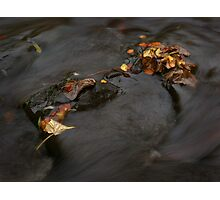 river in autumn I Photographic Print