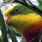 Parrot by Bernie Stronner