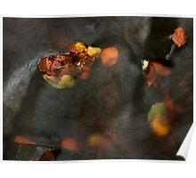 river in autumn II Poster