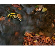 river in autumn III Photographic Print