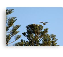 Clever Nesting Osprey Canvas Print