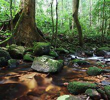 Stream in a rainforest by CWYe