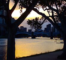 Yarra River, Southgate  by melissathurley