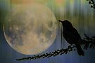 Moonlit Night by Eve Parry