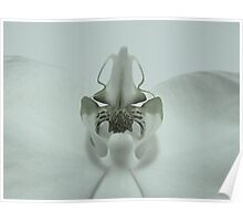 Awkward Orchid Poster