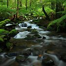 The  Warburton Rainforest Gallery. by Donovan Wilson