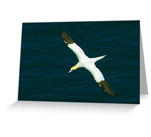 Gannet #1 Greeting Card