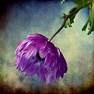 Melancholy Memories by Wendi Donaldson Laird