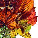 Fall Card Design I by Cameron Hampton