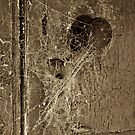 Keyhole Web by Paul Thompson