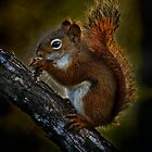 Red Squirrel - Photoshop Manipulation by Michael Cummings