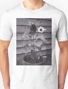 Old & New Sunflower T-Shirt