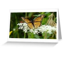 Tattered Beauty Greeting Card